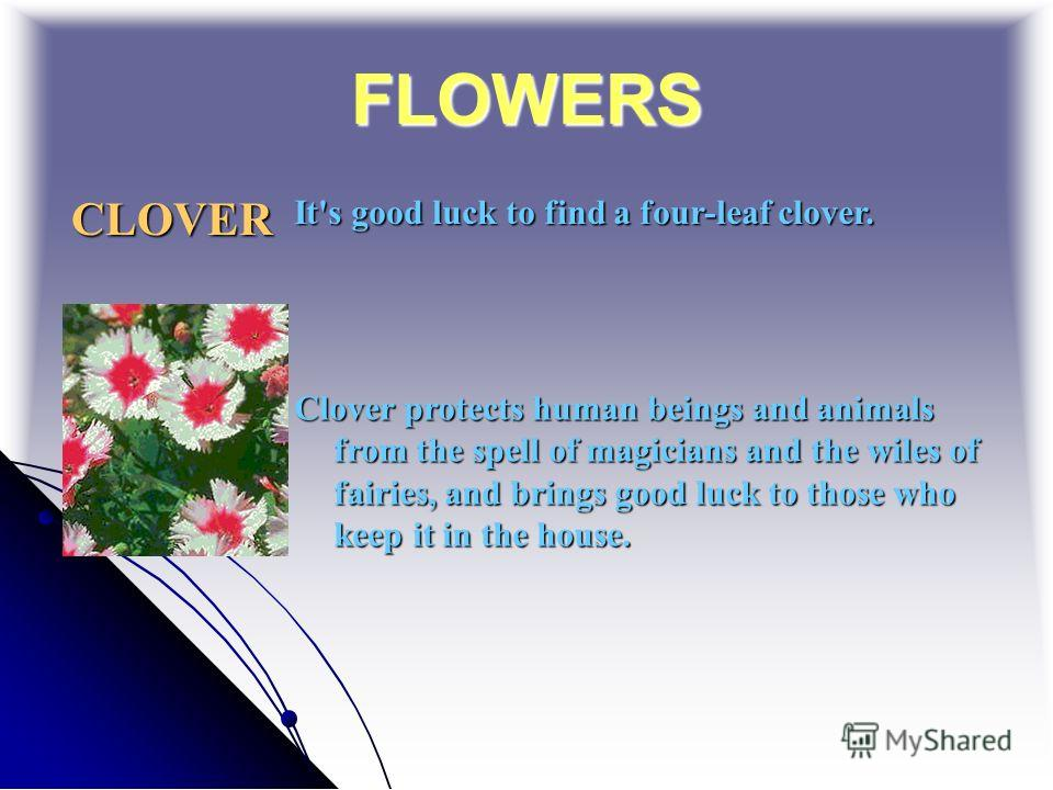 FLOWERS CLOVER It's good luck to find a four-leaf clover. Clover protects human beings and animals from the spell of magicians and the wiles of fairies, and brings good luck to those who keep it in the house.