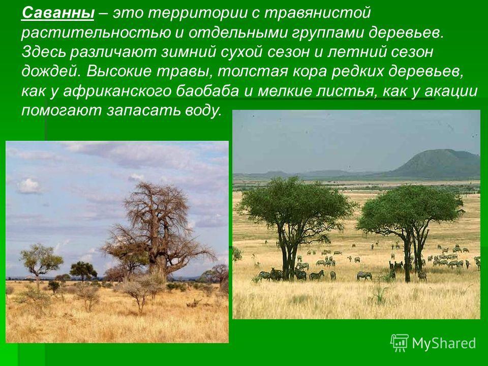 Саванны – это территории с травянистой растительностью и отдельными группами деревьев. Здесь различают зимний сухой сезон и летний сезон дождей. Высокие травы, толстая кора редких деревьев, как у африканского баобаба и мелкие листья, как у акации пом