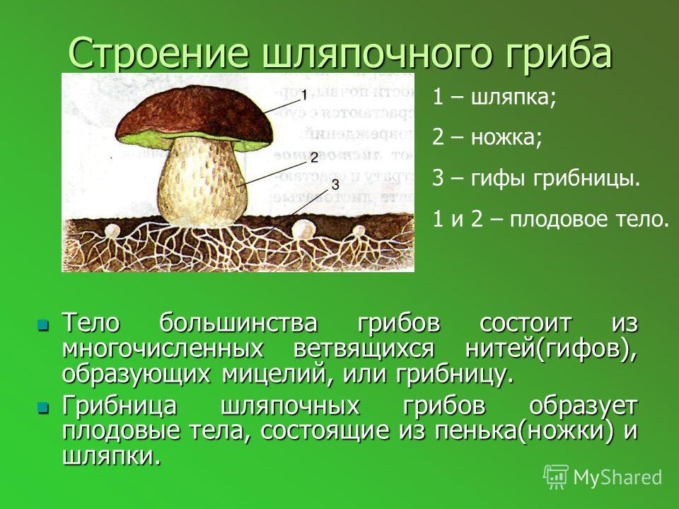 Урок-конференция «Шляпочные грибы» Цель и задачи : 1. углубить и расширить знания о шляпочных грибах; 2. познакомить с правилами сбора и пищевого потребления грибов; 3. продолжить формирование у школьников бережного отношения и любви к природе, эколо