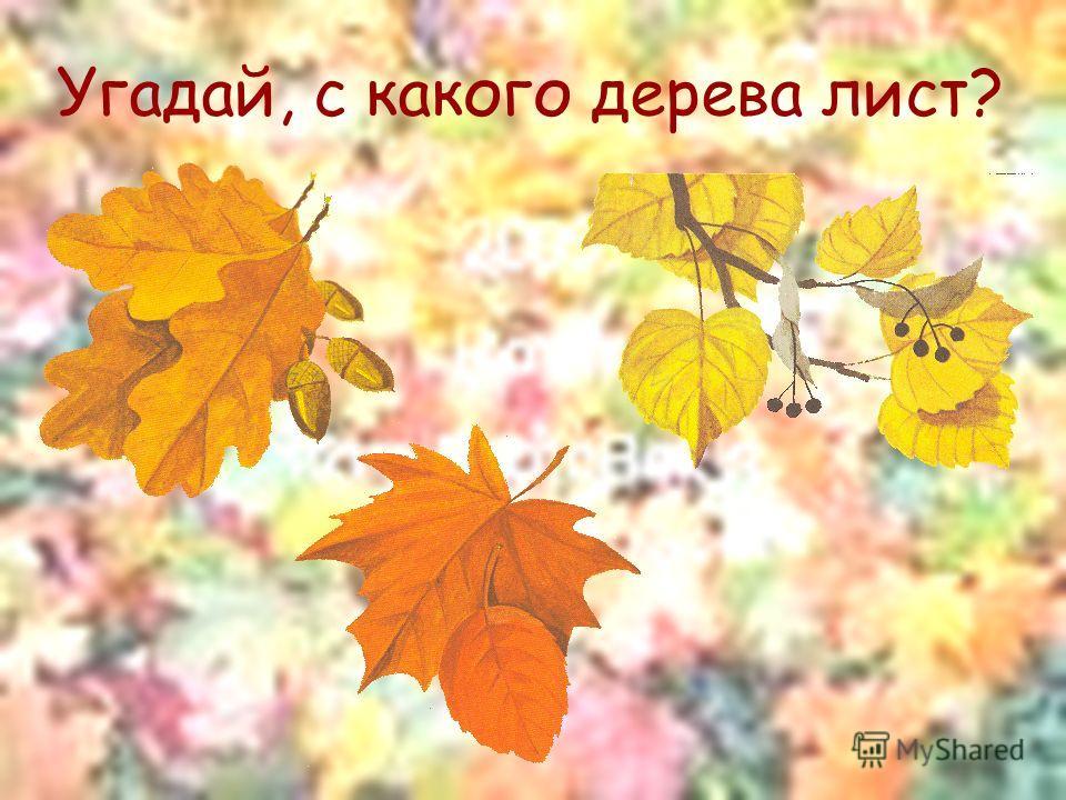 Угадай, с какого дерева лист?