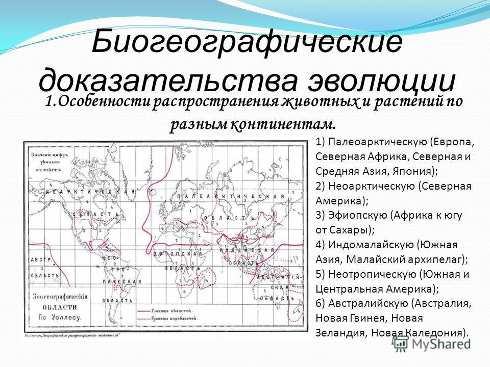 Биогеографические доказательства эволюции 1) Палеоарктическую (Европа, Северная Африка, Северная и Средняя Азия, Япония); 2) Неоарктическую (Северная Америка); 3) Эфиопскую (Африка к югу от Сахары); 4) Индомалайскую (Южная Азия, Малайский архипелаг);