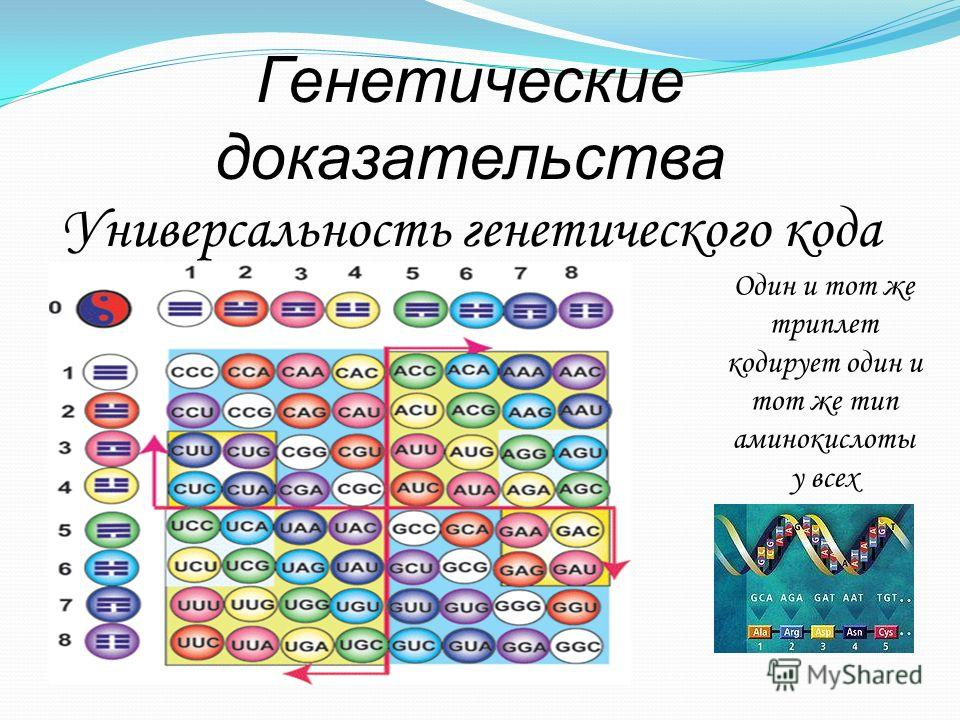 Генетические доказательства Универсальность генетического кода Один и тот же триплет кодирует один и тот же тип аминокислоты у всех организмов