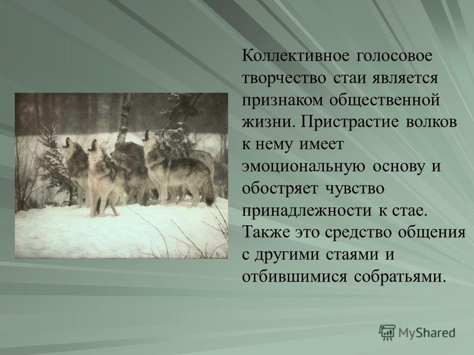 Коллективное голосовое творчество стаи является признаком общественной жизни. Пристрастие волков к нему имеет эмоциональную основу и обостряет чувство принадлежности к стае. Также это средство общения с другими стаями и отбившимися собратьями.