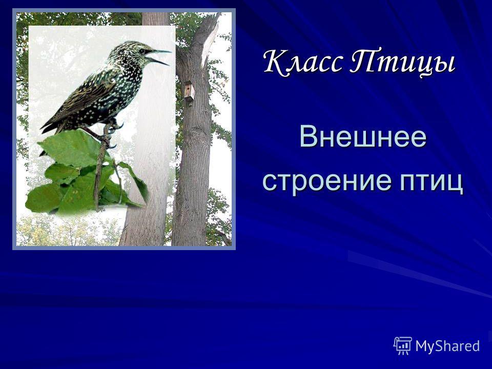 Класс Птицы Внешнее строение птиц Внешнее