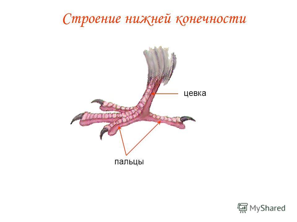 Класс птицы внешнее строение птиц