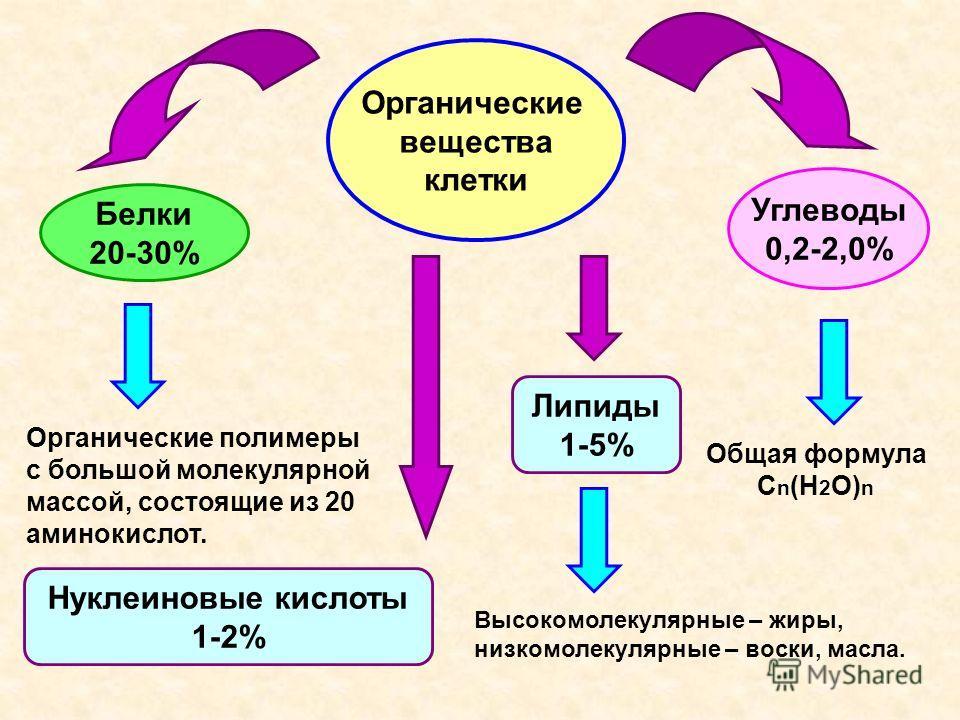 Органические вещества клетки Белки 20-30% Углеводы 0,2-2,0% Липиды 1-5% Органические полимеры с большой молекулярной массой, состоящие из 20 аминокислот. Общая формула С n (H 2 O) n Высокомолекулярные – жиры, низкомолекулярные – воски, масла. Нуклеин