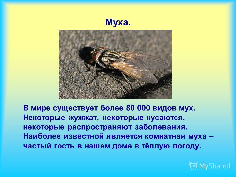 Муха. В мире существует более 80 000 видов мух. Некоторые жужжат, некоторые кусаются, некоторые распространяют заболевания. Наиболее известной является комнатная муха – частый гость в нашем доме в тёплую погоду.