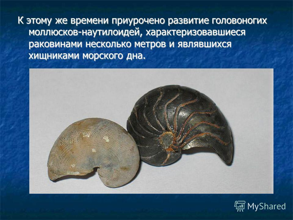 К этому же времени приурочено развитие головоногих моллюсков-наутилоидей, характеризовавшиеся раковинами несколько метров и являвшихся хищниками морского дна.