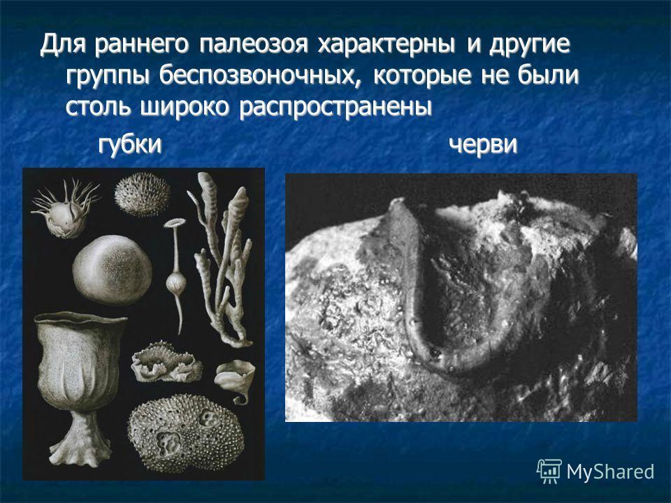 Для раннего палеозоя характерны и другие группы беспозвоночных, которые не были столь широко распространены губки черви губки черви