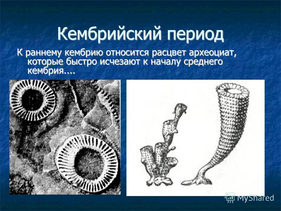 Кембрийский период К раннему кембрию относится расцвет археоциат, которые быстро исчезают к началу среднего кембрия....