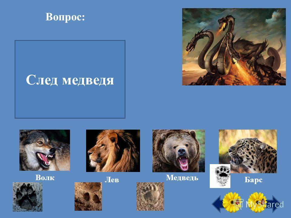 Вопрос: След какого хищного зверя похож на человеческий? След медведя Волк Лев Медведь Барс