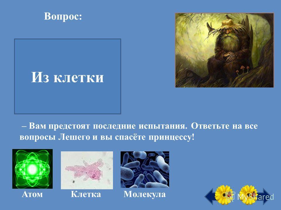 Вопрос: Из чего состоит всё живое на Земле? Из клетки Атом КлеткаМолекула – Вам предстоят последние испытания. Ответьте на все вопросы Лешего и вы спасёте принцессу!