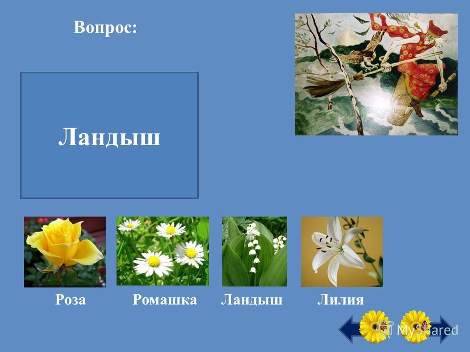 Первый весенний цветок это … Ландыш Вопрос: Роза РомашкаЛандышЛилия