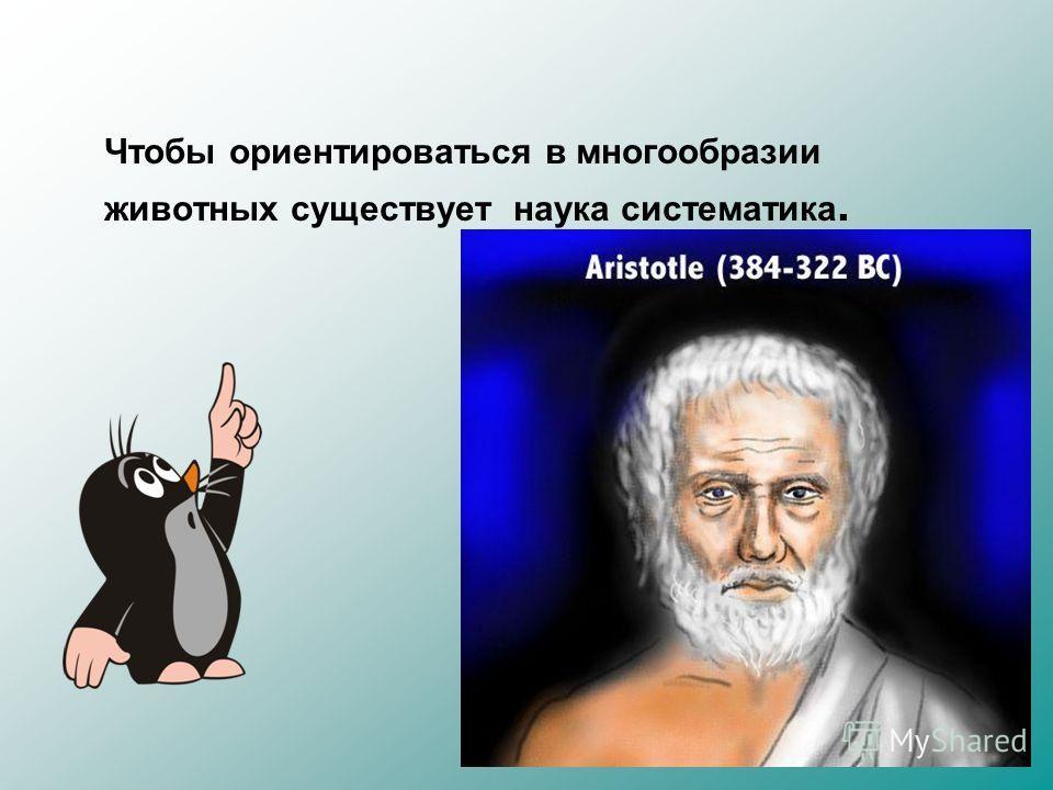Чтобы ориентироваться в многообразии животных существует наука систематика. Впервые система животных была разработана в 4 веке до н.э. Аристотелем
