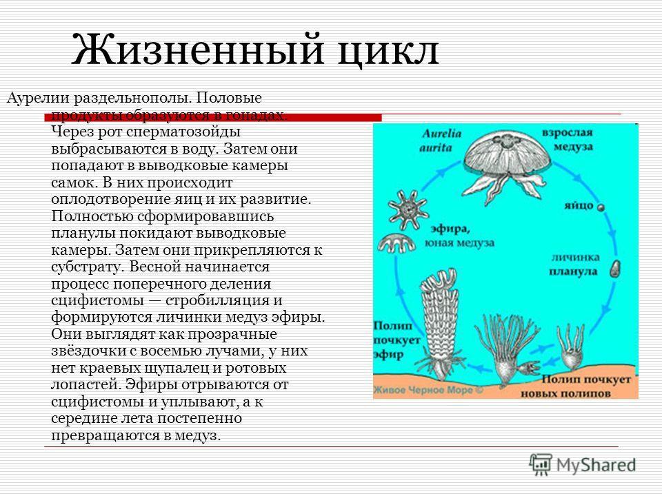 spermatozoidi-umirayut-vo-vneshney-srede