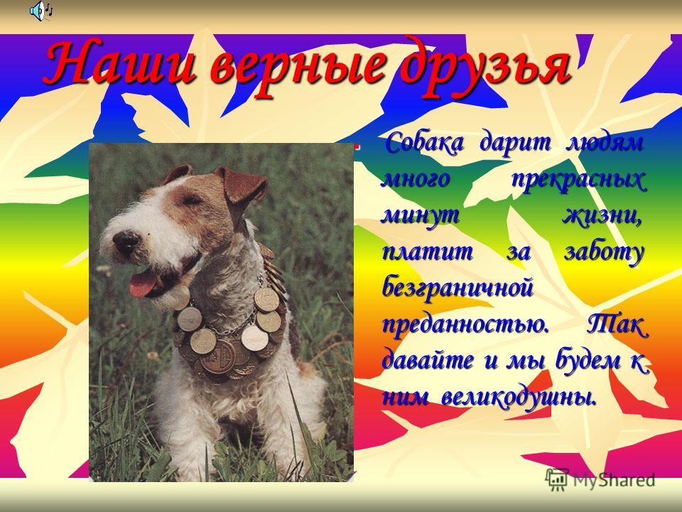 Наши верные друзья Собака дарит людям много прекрасных минут жизни, платит за заботу безграничной преданностью. Так давайте и мы будем к ним великодушны.