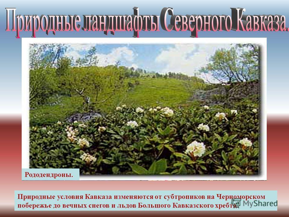 Кавказ - обширная территория между Чёрным, Азовским и Каспийским морями площадью 440 тысяч квадратных километров. Черное море Каспийское море Азовское море Большой Кавказ Кумо-Маныческая впадина Ставропольская возвышенность Прикубанская низменность К