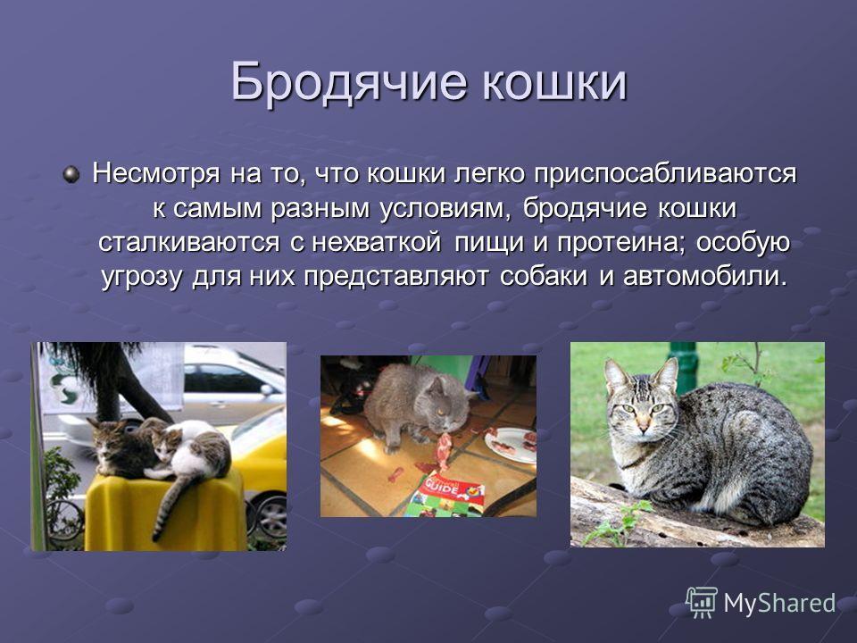 Бродячие кошки Несмотря на то, что кошки легко приспосабливаются к самым разным условиям, бродячие кошки сталкиваются с нехваткой пищи и протеина; особую угрозу для них представляют собаки и автомобили.