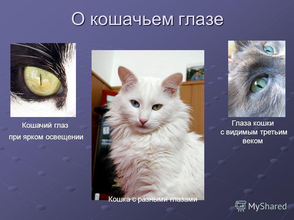 О кошачьем глазе Кошачий глаз при ярком освещении Глаза кошки с видимым третьим веком Кошка с разными глазами