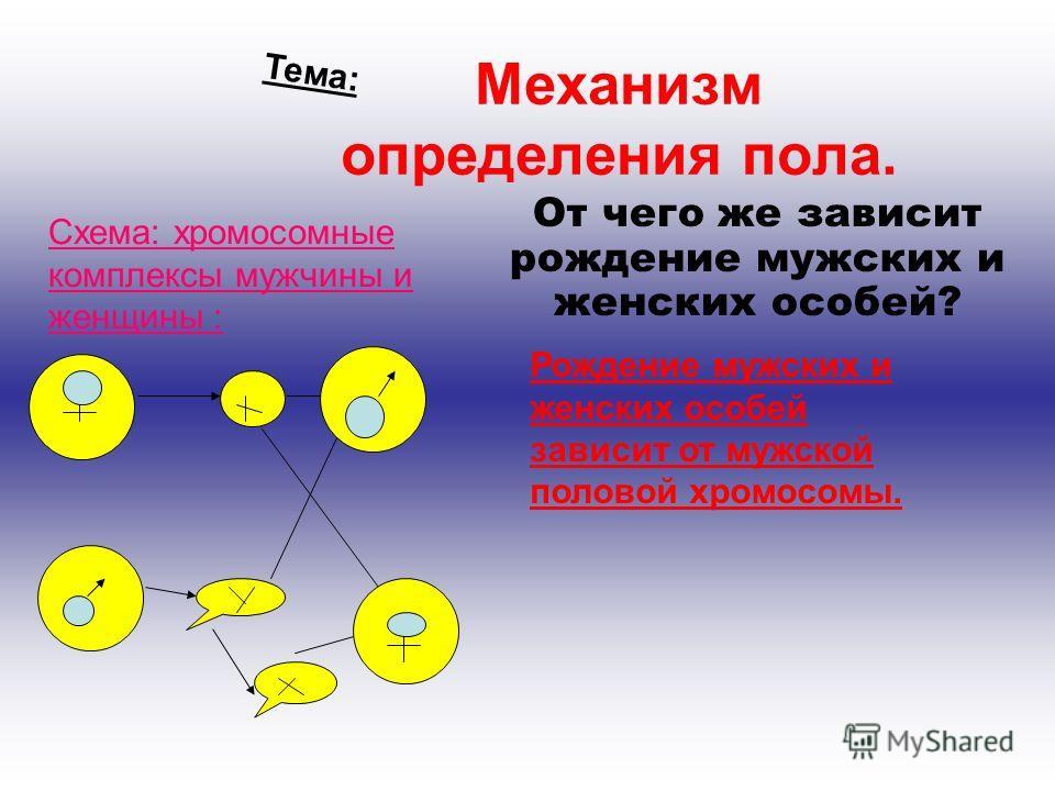 Механизм определения пола. От чего же зависит рождение мужских и женских особей? Рождение мужских и женских особей зависит от мужской половой хромосомы. Тема: Схема: хромосомные комплексы мужчины и женщины :