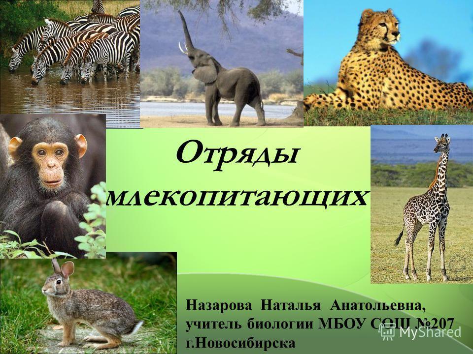 Отряды млекопитающих Назарова Наталья Анатольевна, учитель биологии МБОУ СОШ 207 г.Новосибирска
