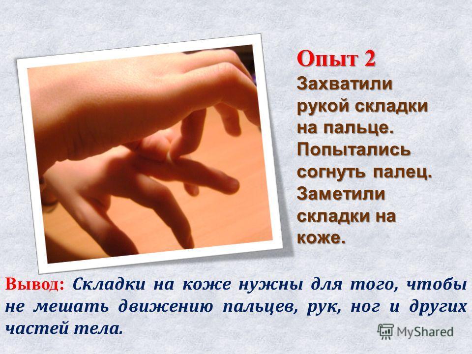 Опыт 2 Захватили рукой складки на пальце. Попытались согнуть палец. Заметили складки на коже. Вывод: Складки на коже нужны для того, чтобы не мешать движению пальцев, рук, ног и других частей тела.