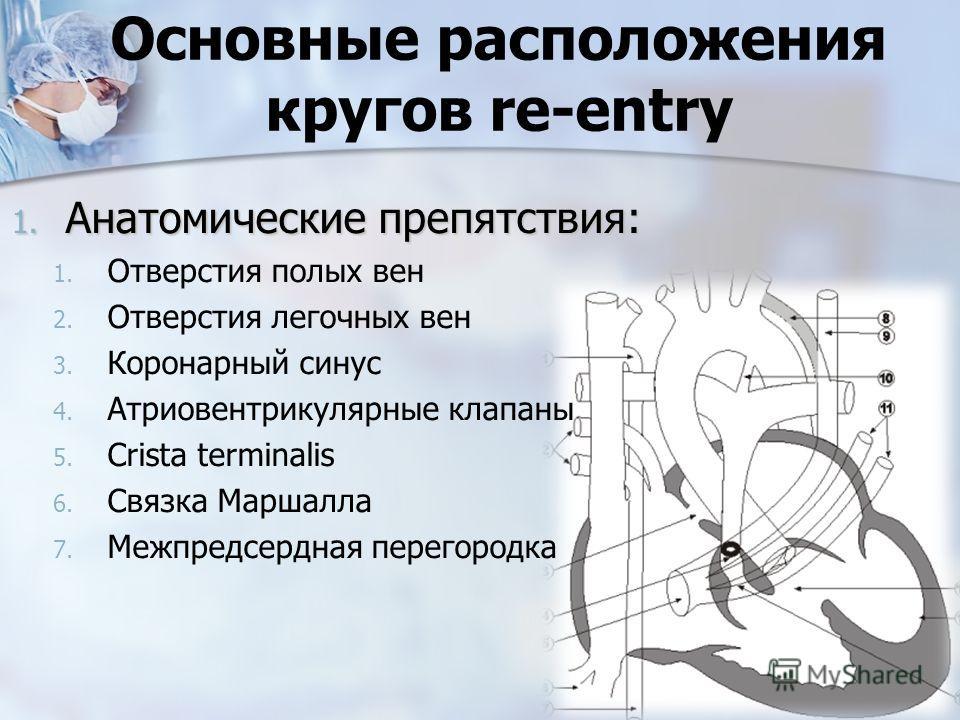 Основные расположения кругов re-entry 1. Анатомические препятствия: 1. 1. Отверстия полых вен 2. 2. Отверстия легочных вен 3. 3. Коронарный синус 4. 4. Атриовентрикулярные клапаны 5. 5. Сrista terminalis 6. 6. Связка Маршалла 7. 7. Межпредсердная пер
