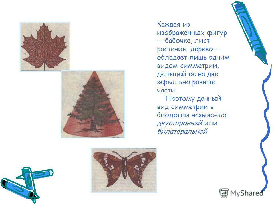 Каждая из изображенных фигур бабочка, лист растения, дерево обладает лишь одним видом симметрии, делящей ее на две зеркально равные части. Поэтому данный вид симметрии в биологии называется двусторонней или билатеральной