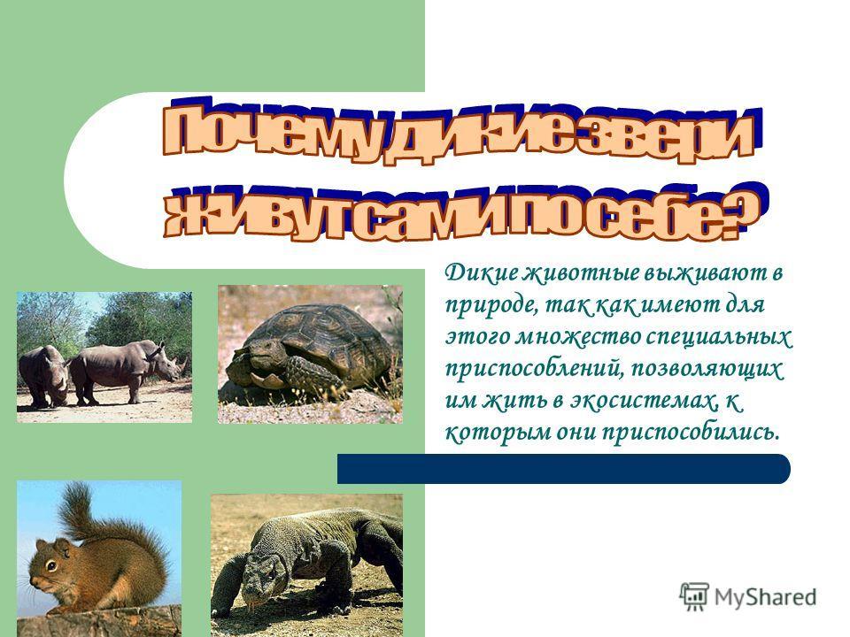 Дикие животные выживают в природе, так как имеют для этого множество специальных приспособлений, позволяющих им жить в экосистемах, к которым они приспособились.