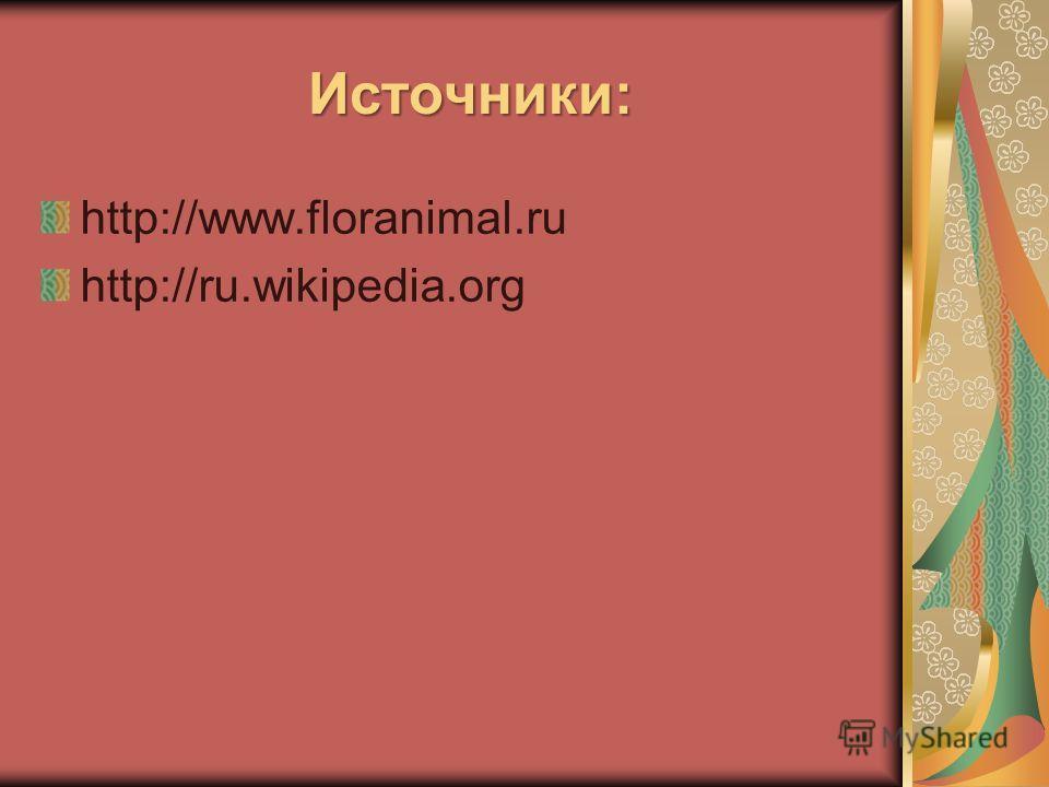 Источники: Источники: http://www.floranimal.ru http://ru.wikipedia.org
