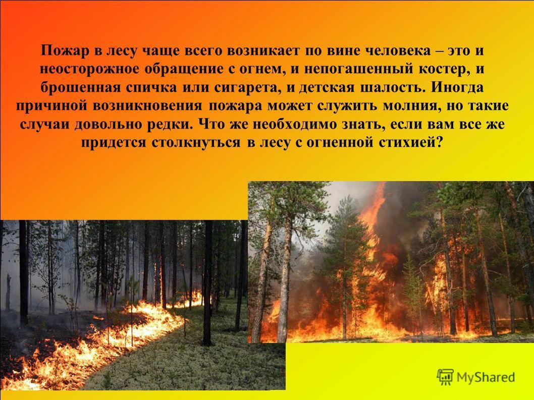 Пожар в лесу чаще всего возникает по