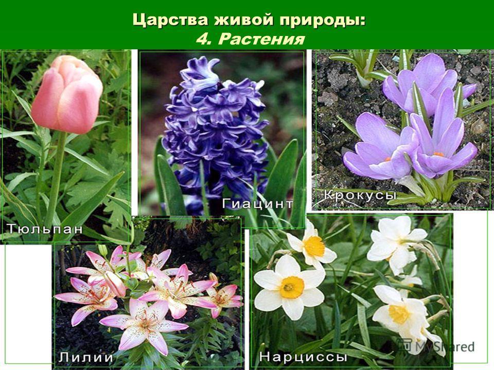 Царства живой природы: Царства живой природы: 4. Растения