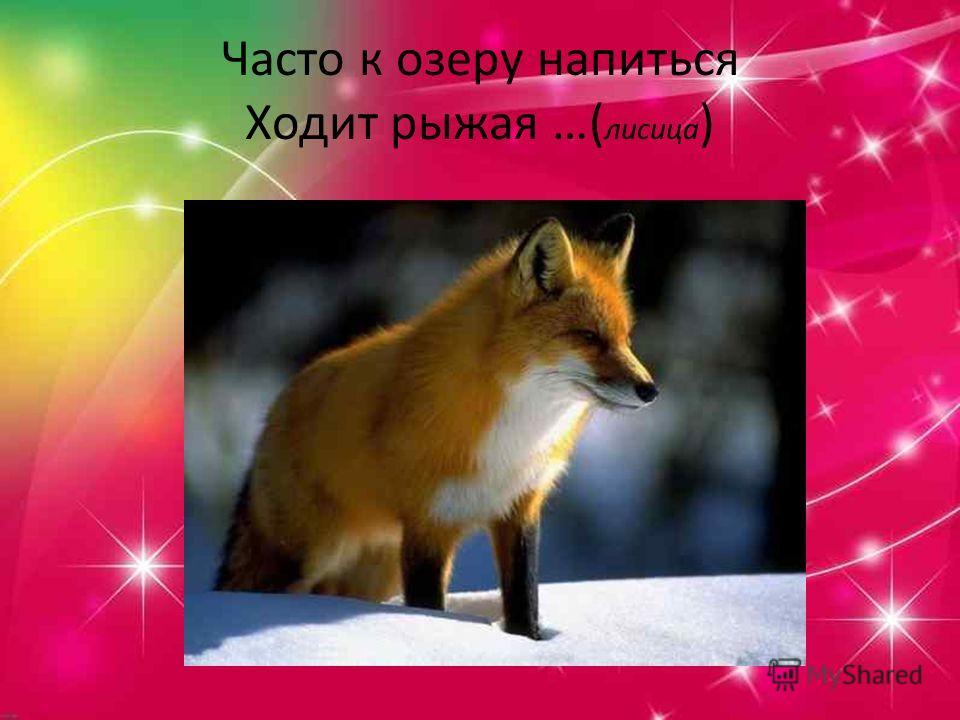 Часто к озеру напиться Ходит рыжая …( лисица )