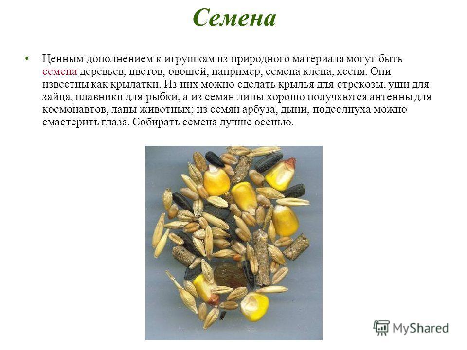 Семена Ценным дополнением к игрушкам из природного материала могут быть семена деревьев, цветов, овощей, например, семена клена, ясеня. Они известны как крылатки. Из них можно сделать крылья для стрекозы, уши для зайца, плавники для рыбки, а из семян