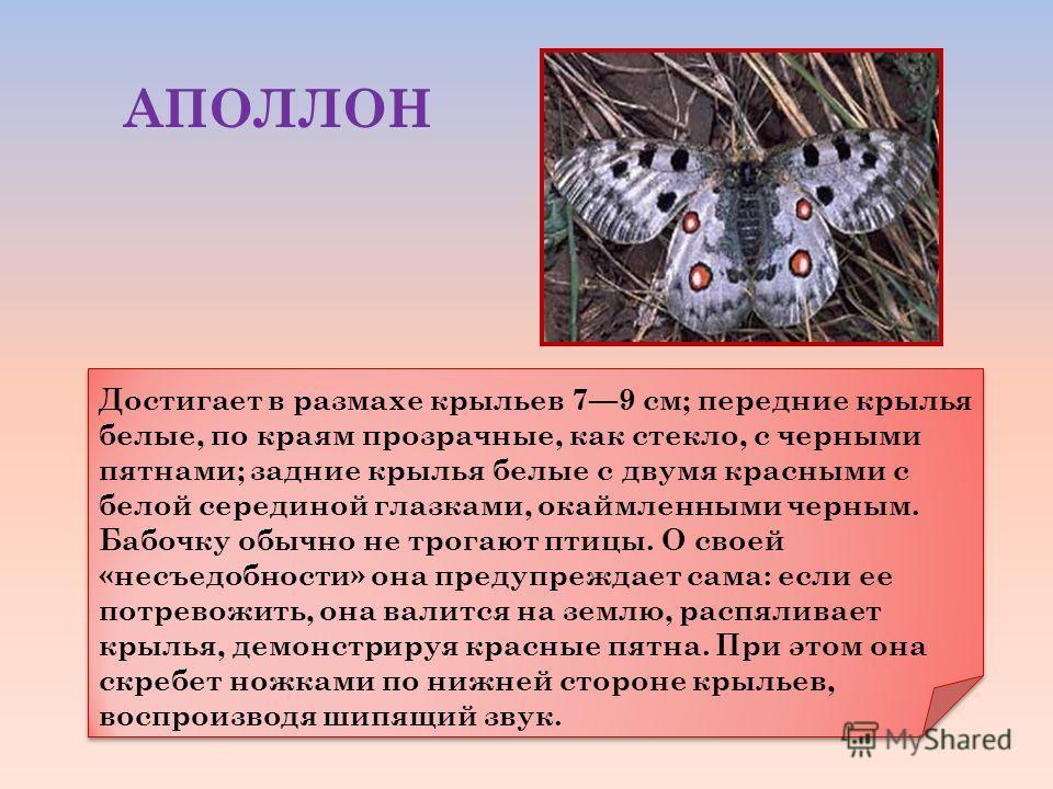 Достигает в размахе крыльев 79 см; передние крылья белые, по краям прозрачные, как стекло, с черными пятнами; задние крылья белые с двумя красными с белой серединой глазками, окаймленными черным. Бабочку обычно не трогают птицы. О своей «несъедобност