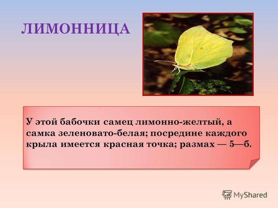 У этой бабочки самец лимонно-желтый, а самка зеленовато-белая; посредине каждого крыла имеется красная точка; размах 5б. ЛИМОННИЦА