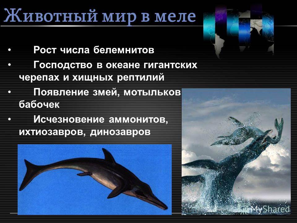 Животный мир в меле Рост числа белемнитов Господство в океане гигантских черепах и хищных рептилий Появление змей, мотыльков и бабочек Исчезновение аммонитов, ихтиозавров, динозавров
