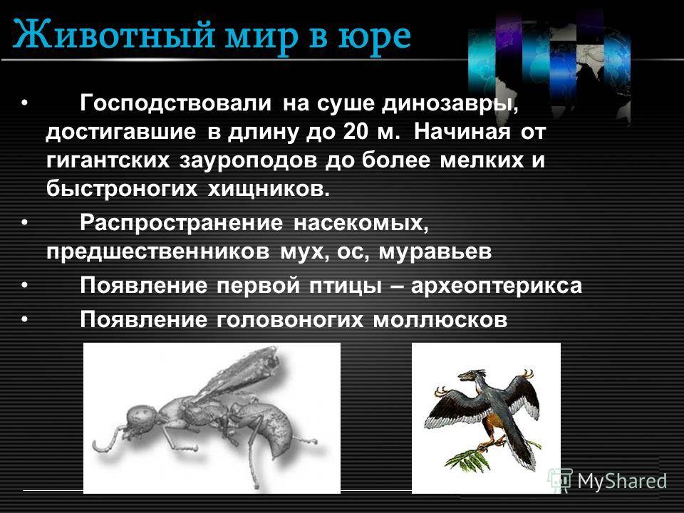 Животный мир в юре Господствовали на суше динозавры, достигавшие в длину до 20 м. Начиная от гигантских зауроподов до более мелких и быстроногих хищников. Распространение насекомых, предшественников мух, ос, муравьев Появление первой птицы – археопте