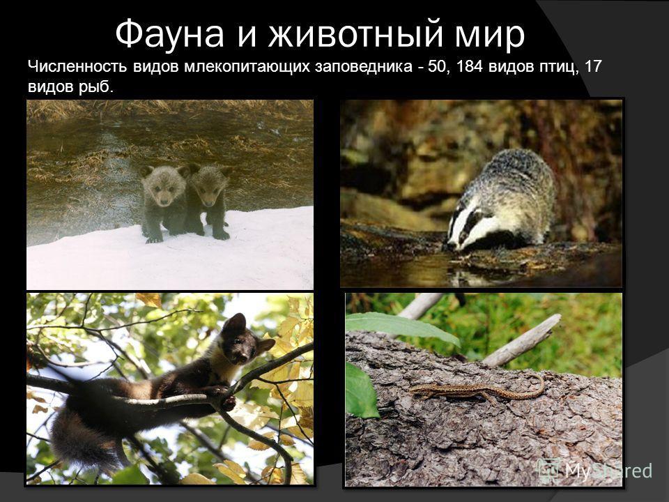 Фауна и животный мир Численность видов млекопитающих заповедника - 50, 184 видов птиц, 17 видов рыб.
