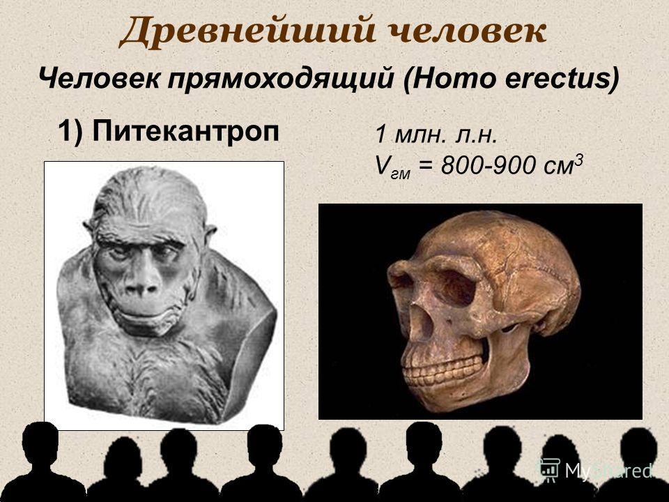 Древнейший человек 1 млн. л.н. V гм = 800-900 см 3 Человек прямоходящий (Homo erectus) 1) Питекантроп