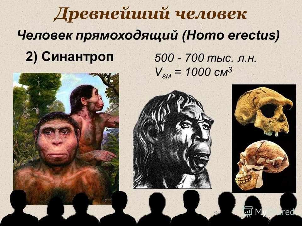 Древнейший человек 500 - 700 тыс. л.н. V гм = 1000 см 3 Человек прямоходящий (Homo erectus) 2) Синантроп