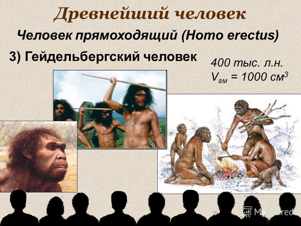 Древнейший человек 400 тыс. л.н. V гм = 1000 см 3 Человек прямоходящий (Homo erectus) 3) Гейдельбергский человек