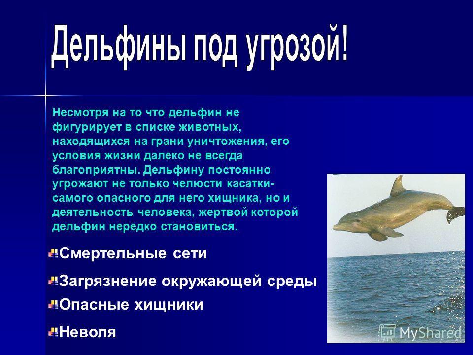 Несмотря на то что дельфин не фигурирует в списке животных, находящихся на грани уничтожения, его условия жизни далеко не всегда благоприятны. Дельфину постоянно угрожают не только челюсти касатки- самого опасного для него хищника, но и деятельность