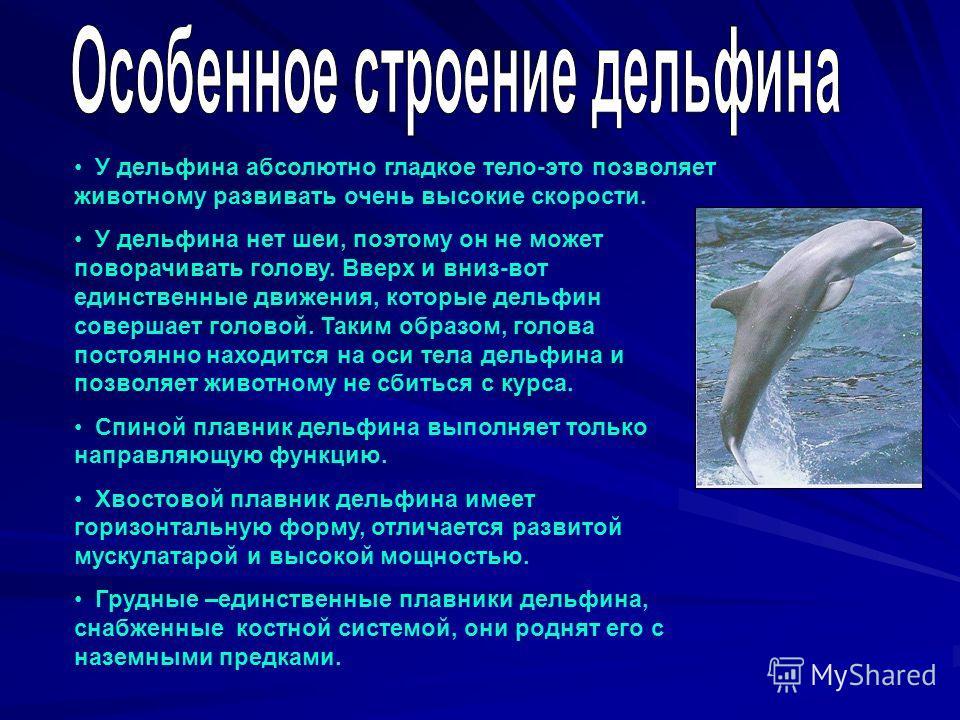 У дельфина абсолютно гладкое тело-это позволяет животному развивать очень высокие скорости. У дельфина нет шеи, поэтому он не может поворачивать голову. Вверх и вниз-вот единственные движения, которые дельфин совершает головой. Таким образом, голова