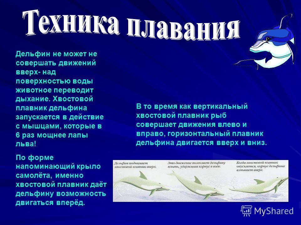 В то время как вертикальный хвостовой плавник рыб совершает движения влево и вправо, горизонтальный плавник дельфина двигается вверх и вниз. Дельфин не может не совершать движений вверх- над поверхностью воды животное переводит дыхание. Хвостовой пла