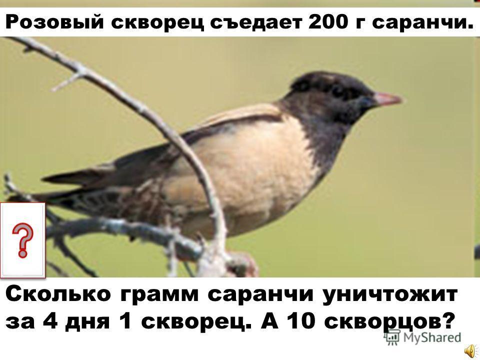 Розовый скворец съедает 200 г саранчи. Сколько грамм саранчи уничтожит за 4 дня 1 скворец. А 10 скворцов?
