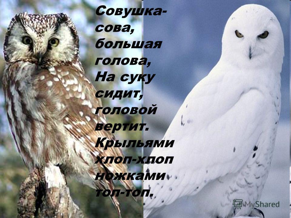 Совушка- сова, большая голова, На суку сидит, головой вертит. Крыльями хлоп-хлоп ножками топ-топ.