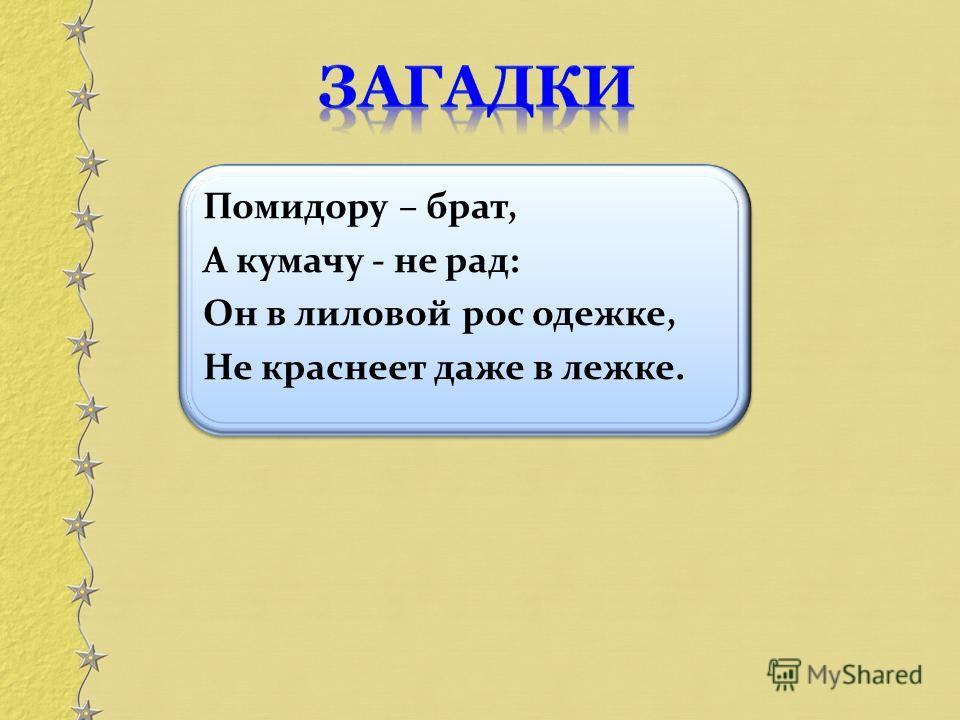 Помидору – брат, А кумачу - не рад: Он в лиловой рос одежке, Не краснеет даже в лежке.