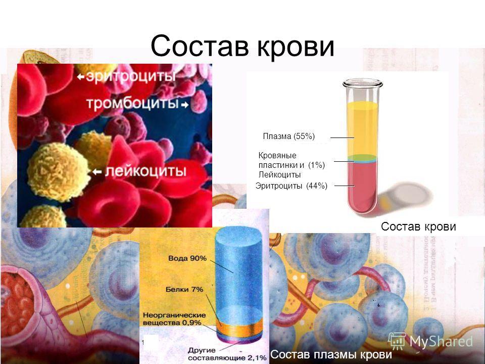 Состав крови Плазма (55%) Кровяные пластинки и (1%) Лейкоциты Эритроциты (44%) Состав крови Состав плазмы крови