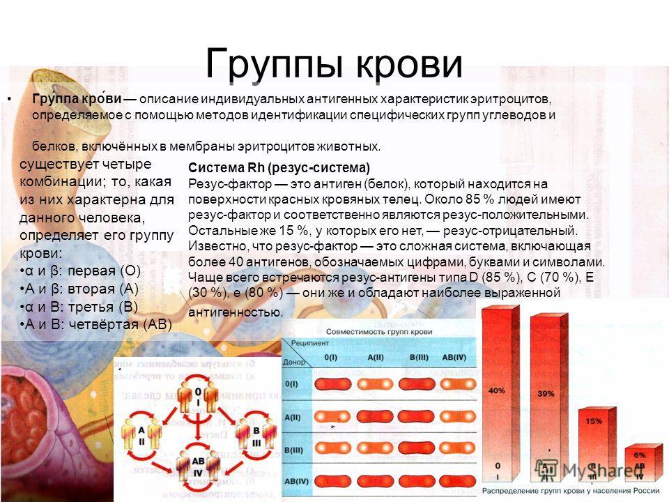 Группы крови Гру́ппа кро́ви описание индивидуальных антигенных характеристик эритроцитов, определяемое с помощью методов идентификации специфических групп углеводов и белков, включённых в мембраны эритроцитов животных. существует четыре комбинации; т